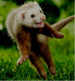 Ferret Words of Wisdom About Life