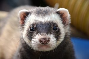 Ferret Proofing
