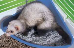 What's the best Ferret bedding?