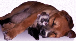Trusted Pet Sitters--Trusted Housesitters Review