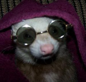 25 Ferret Halloween Costumes
