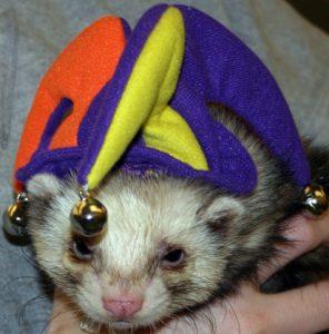 25 Ferret Halloween Costumes