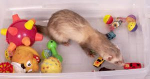 Ferret Toy Ideas