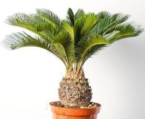 Hazardous Plants for Pets