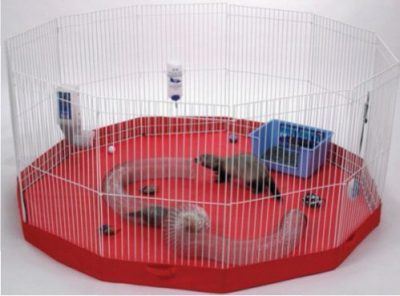 Marshall Playpen Review For Ferrets