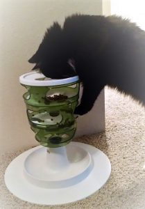 Catit Design Senses Food Treat Maze Review For Ferrets