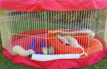 Ferret Playpens--What to Look For