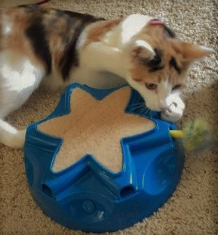 OurPets Catty Whack Toy--Review for Ferrets
