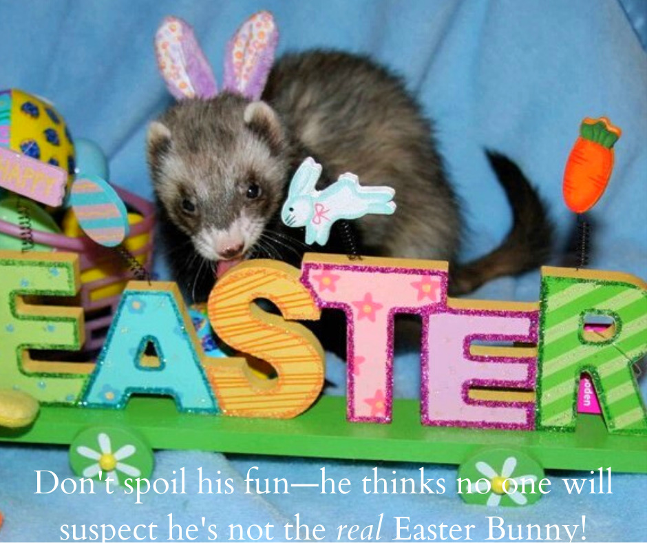 ferret Easter Bunny
